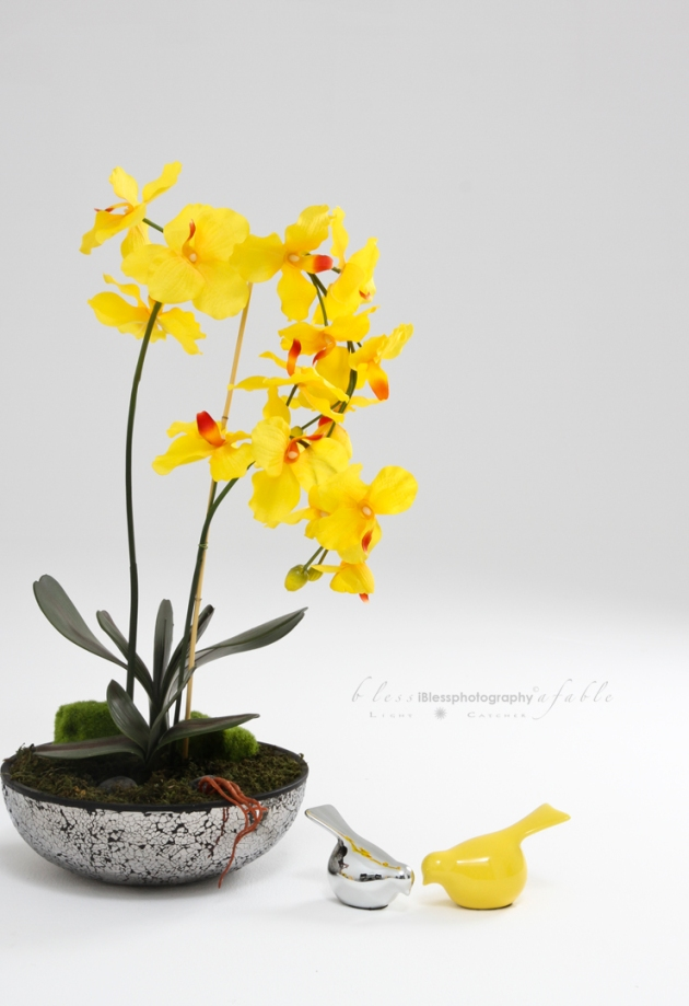 Yellow Orchid Bird